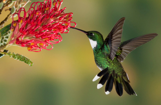 SEO for Google Hummingbird